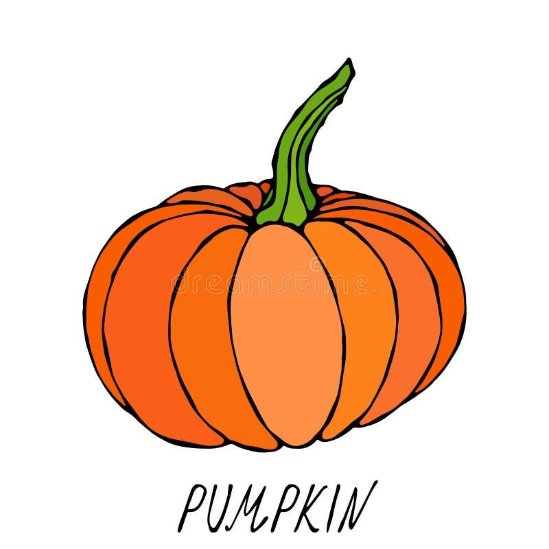 померанцовая тыква Осень или собрание сбора падения Vegetable Реалистической нарисованная рукой высококачественная иллюстрация ве иллюстрация вектора