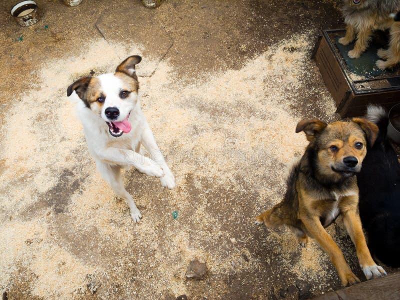 помехи собак стоковое фото
