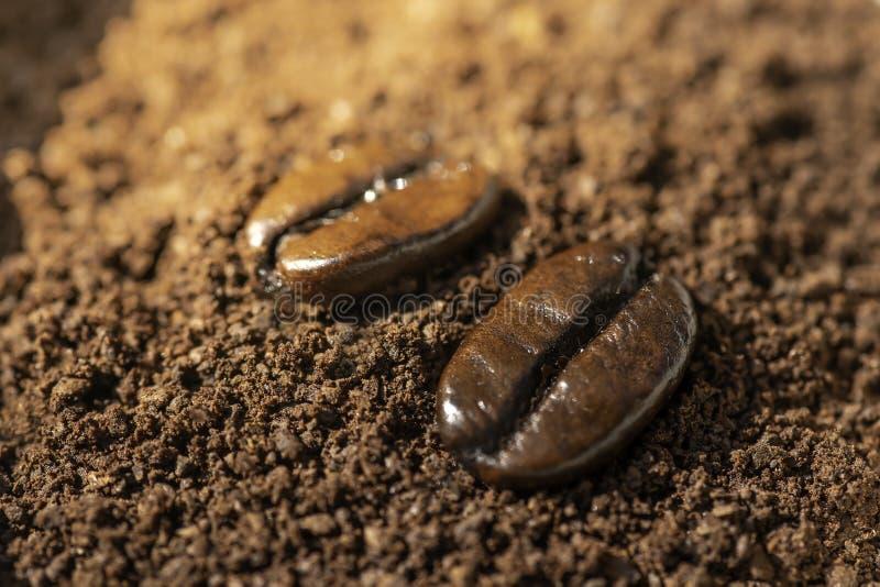 Помещают мягкие кофейные зерна фокуса на кофе который был задавлен в грубый порошок Подготовьте brew стоковые фото