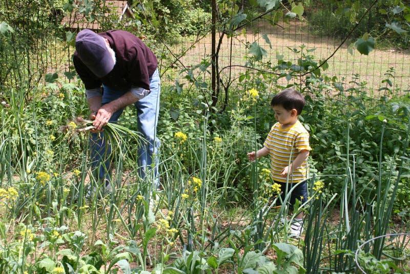 помогать grandpa сада мальчика стоковая фотография