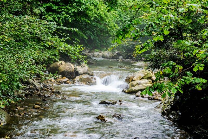 Помох над потоком горы стоковое фото