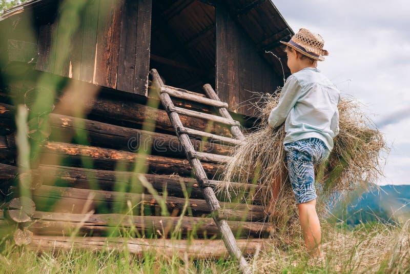 Помощь мальчика положила сено в сеновал стоковые фотографии rf