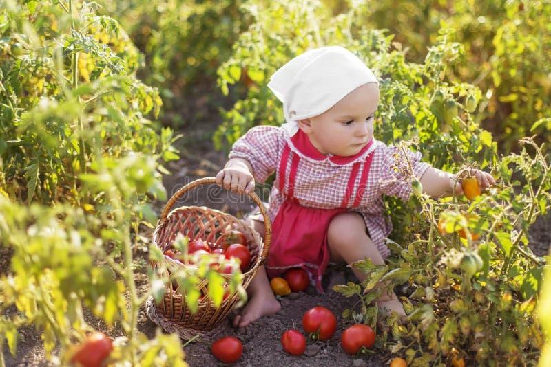 Помощь ребенка для того чтобы принять урожай стоковая фотография