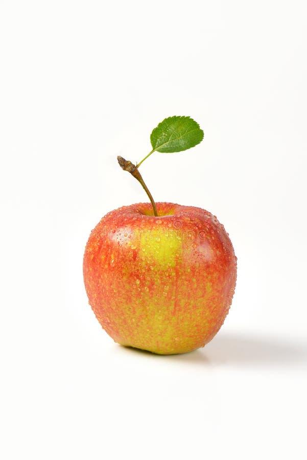 Помытое красное яблоко стоковое изображение