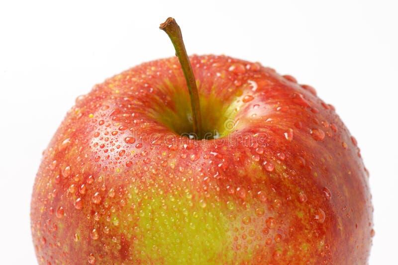 Помытое красное яблоко стоковые фото