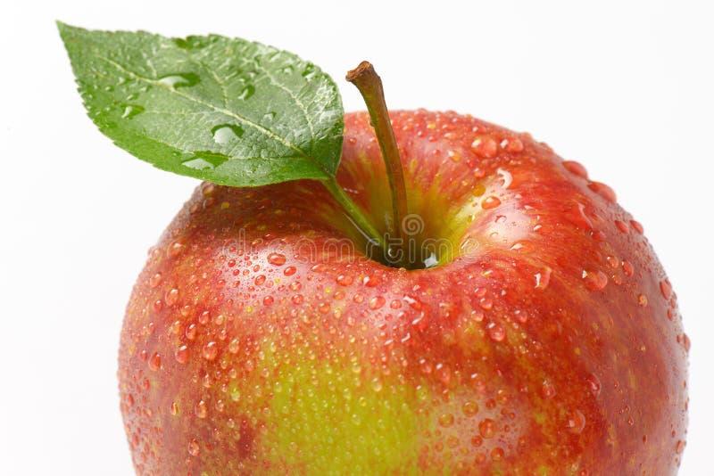 Помытое красное яблоко стоковая фотография