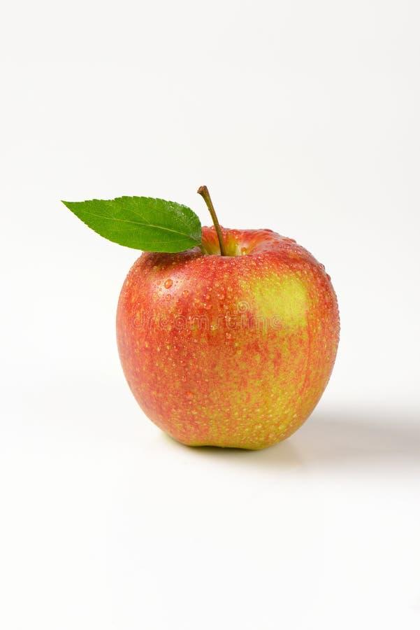 Помытое красное яблоко стоковые изображения
