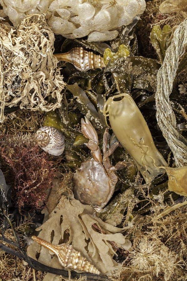 Помыто ashore Выбор морской флоры и фауны, раковин, морской водоросли и deb стоковые изображения rf