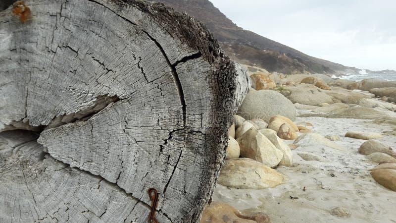 Помытый вверх по хоботу вдоль пляжа стоковые фотографии rf