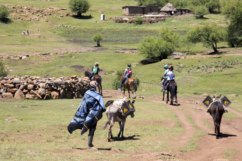 Пони trekking в Лесото около Semonkong стоковая фотография rf