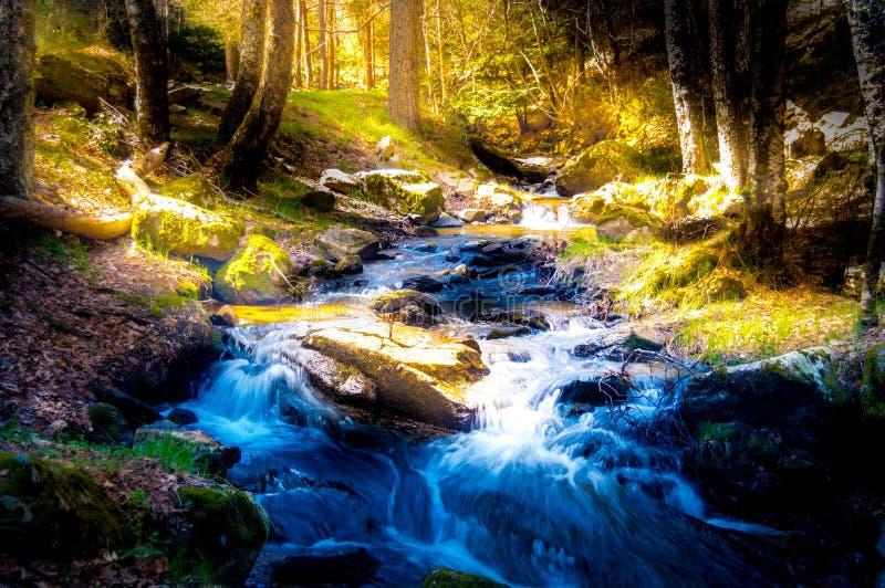 Поохоченный лес стоковая фотография rf
