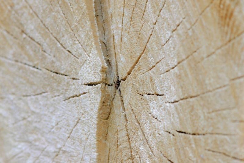 Поперечное сечение дерева стоковые фото