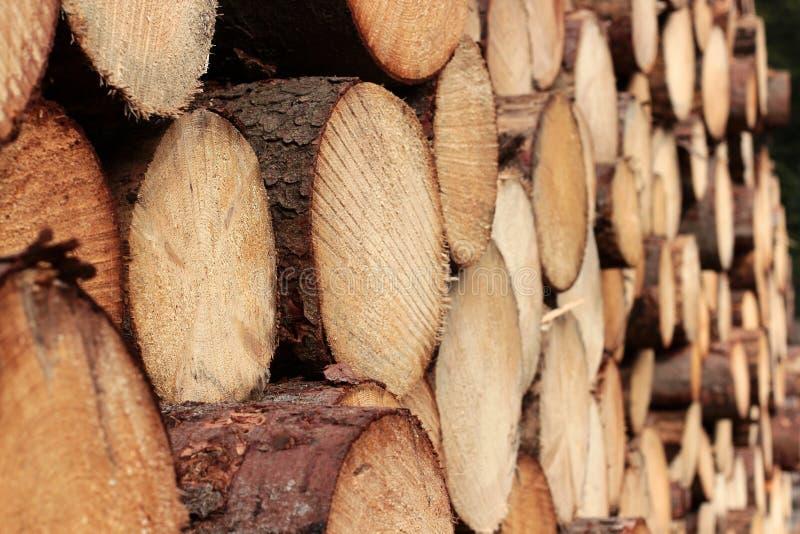 Поперечное сечение предпосылки стволов дерева Украшение дерева вырезывания Стволы дерева вырезывания помещенные совместно для инт стоковое фото rf