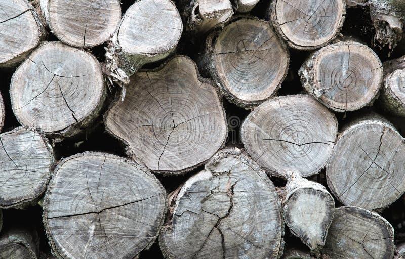 Поперечное сечение предпосылки стволов дерева стоковые изображения rf