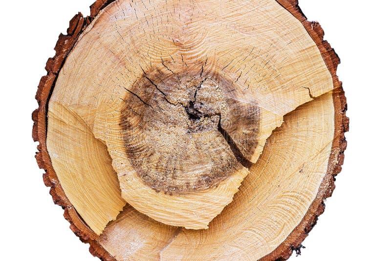 Поперечное сечение древесины на белой предпосылке стоковая фотография