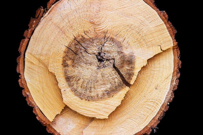 Поперечное сечение древесины на черной предпосылке стоковые фотографии rf