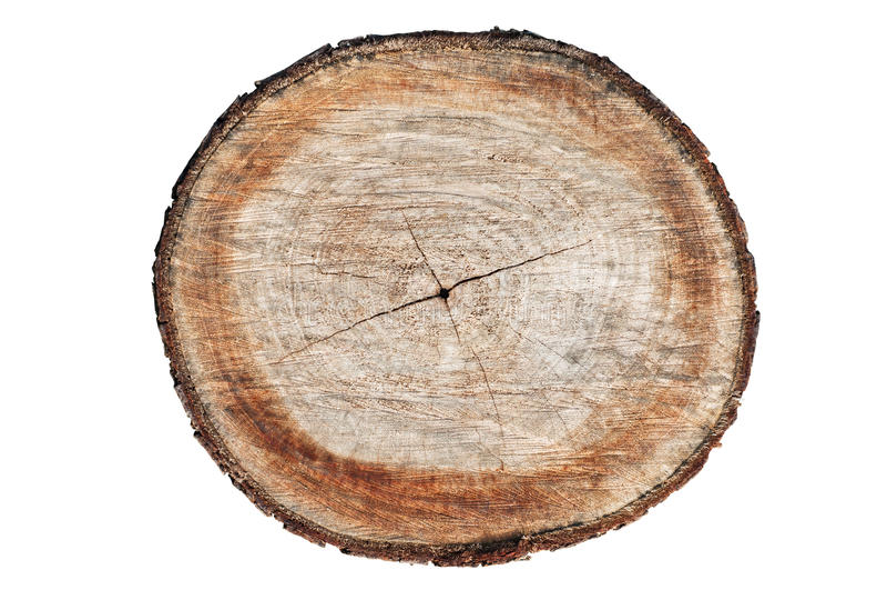 Поперечное сечение ствола дерева стоковая фотография rf