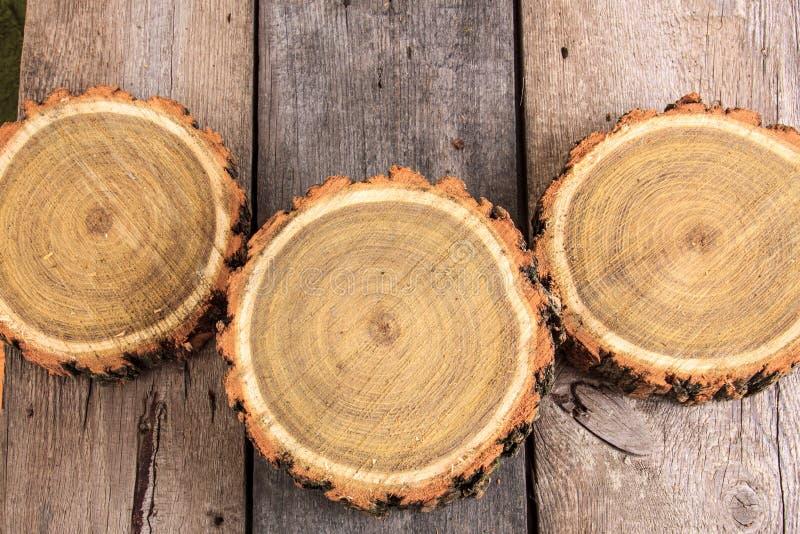 Поперечное сечение стволов дерева показывая годичные кольца стоковая фотография rf