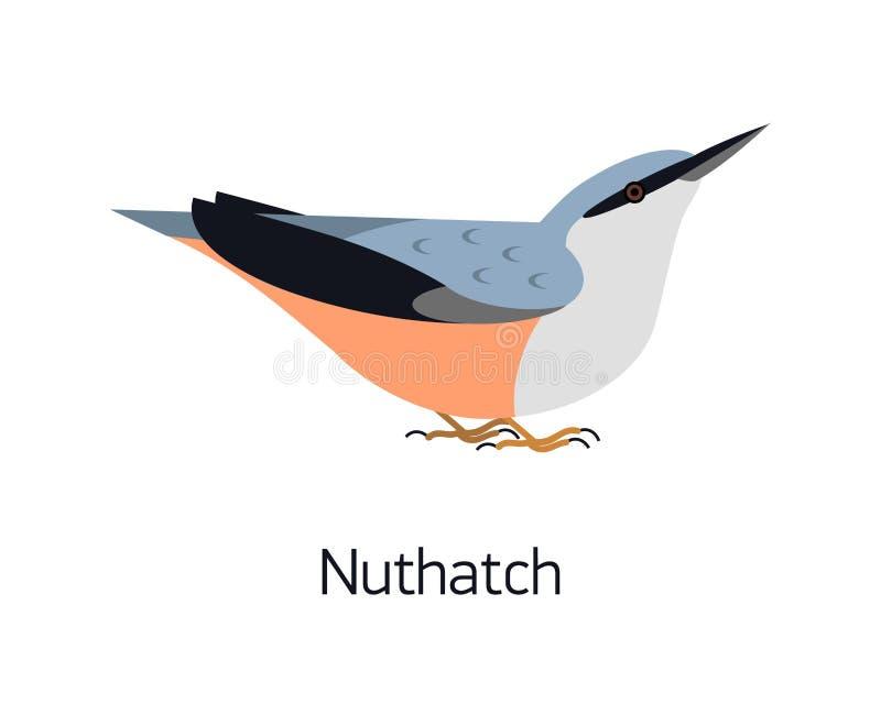 Поползневый изолированный на белой предпосылке Милая небольшая птица полесья с ярким оперением Шикарное прелестное дикое птичье бесплатная иллюстрация