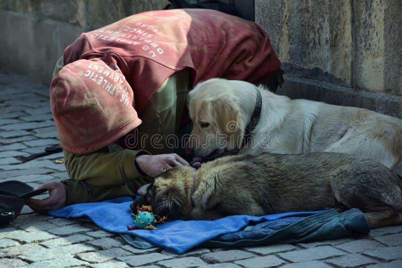Попрошайка умоляя с собаками стоковые фотографии rf