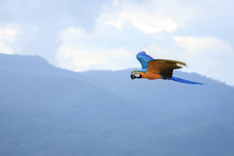 Попугаи ар стоковое изображение