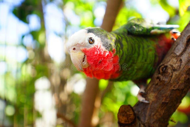 Попугай около тропического пляжа стоковые фотографии rf