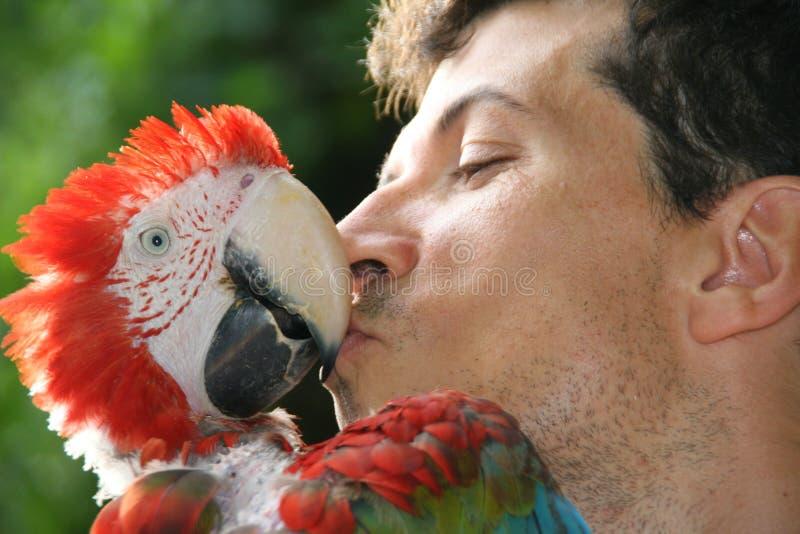 Попугай целуя его предпринимателя стоковое изображение rf