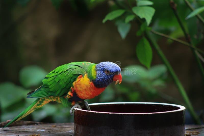 Попугай! стоковая фотография rf
