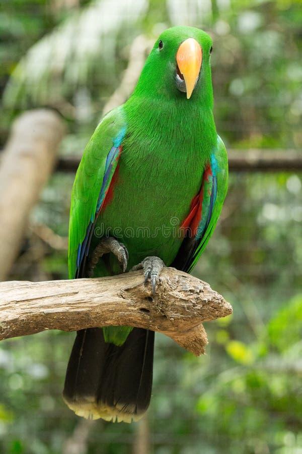 Download Попугай стоковое изображение. изображение насчитывающей macaw - 33729415