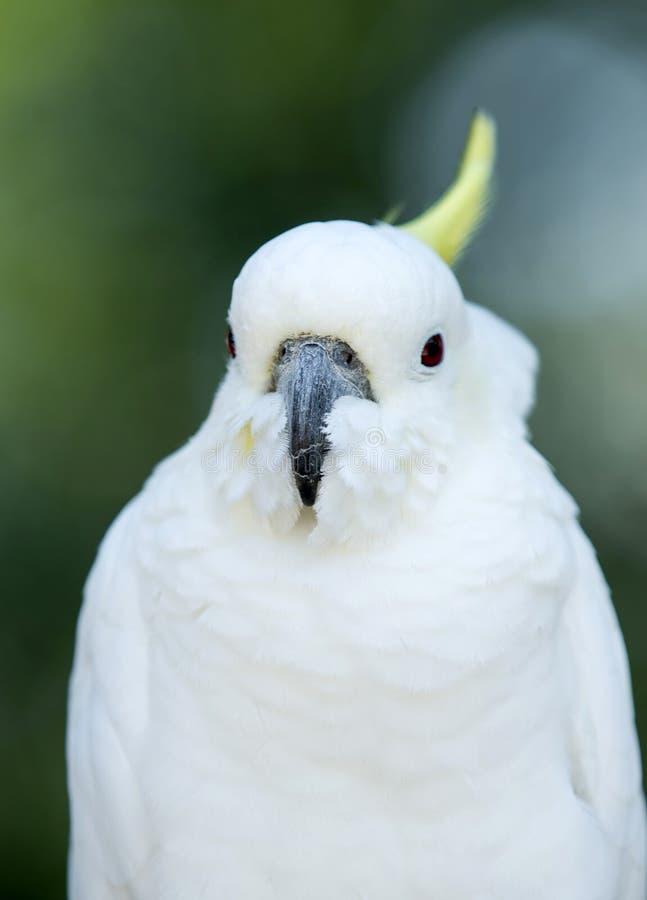 Download Попугай стоковое изображение. изображение насчитывающей глаз - 33729961