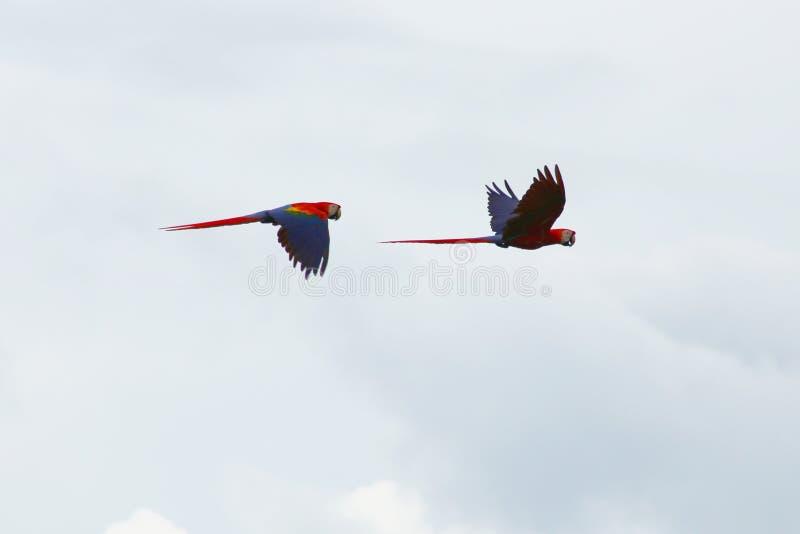 Попугай стоковые фото