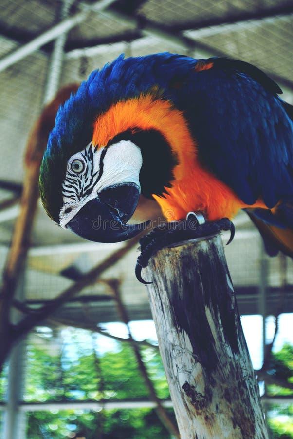 Попугай стоковая фотография