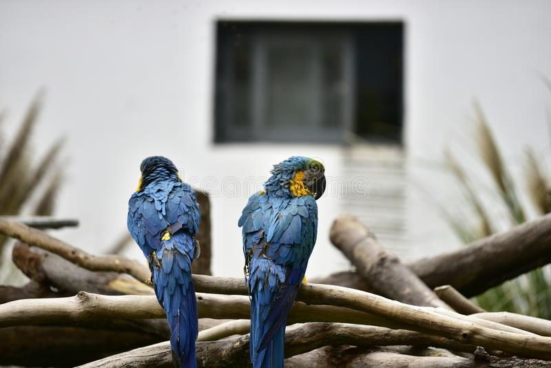2 попугая стоят на ветви стоковое фото rf