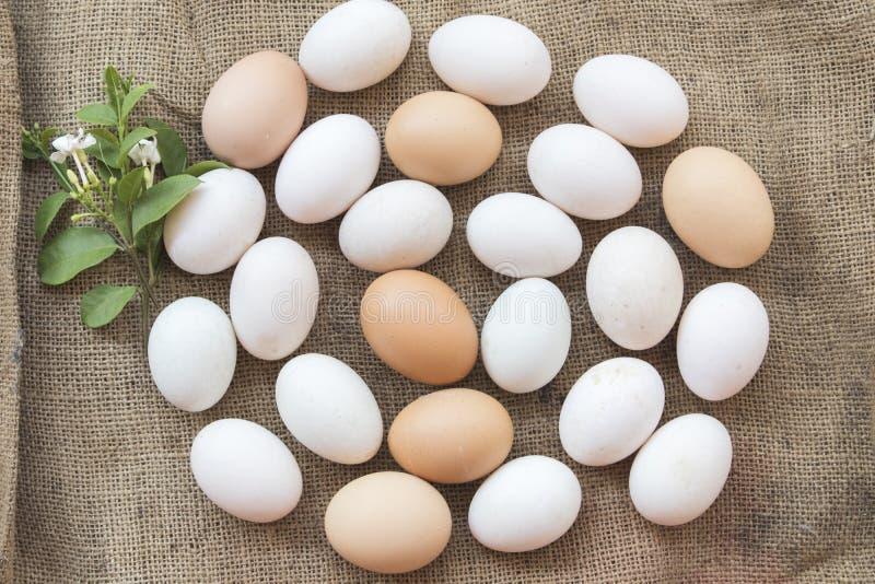 Популярные яичка еды сырцовые на старом мешке стоковое фото rf