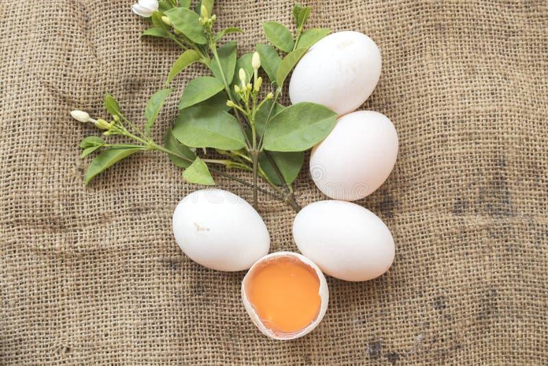 Популярные яичка еды сырцовые на старом мешке стоковые изображения rf