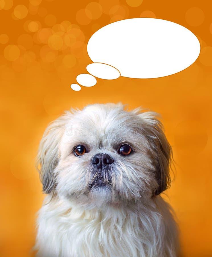 Породы собаки tzu Shih Сладостный портрет doggie с пузырем комиксов стоковые фото
