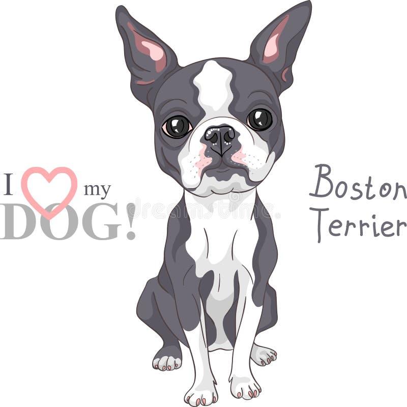Порода терьера Бостона собаки эскиза вектора серьезная иллюстрация штока