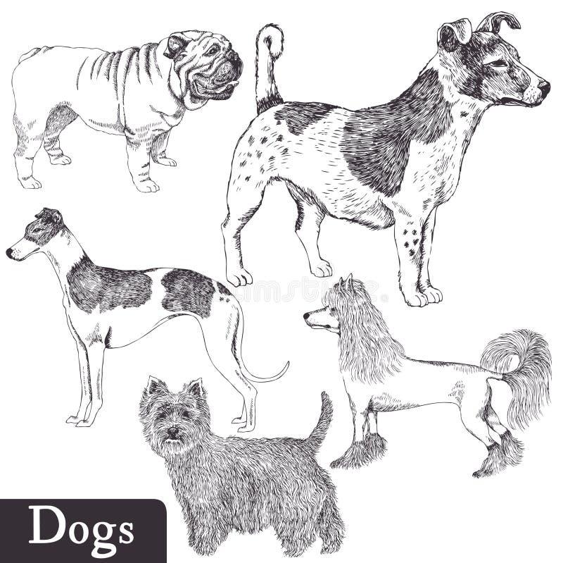 Породы комплекта собак иллюстрация штока