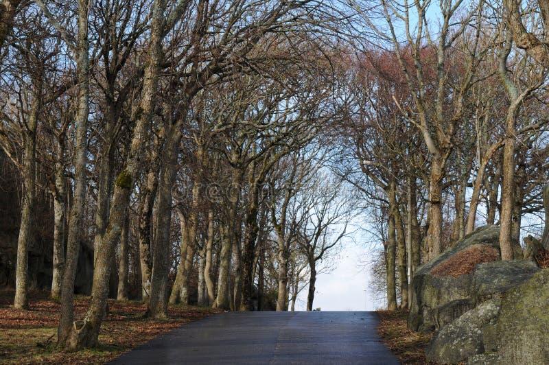 Портал деревьев в предыдущей весне стоковое изображение rf