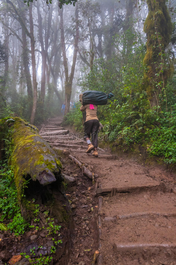 Портер возглавляя вверх по следу на Килиманджаро стоковые фотографии rf