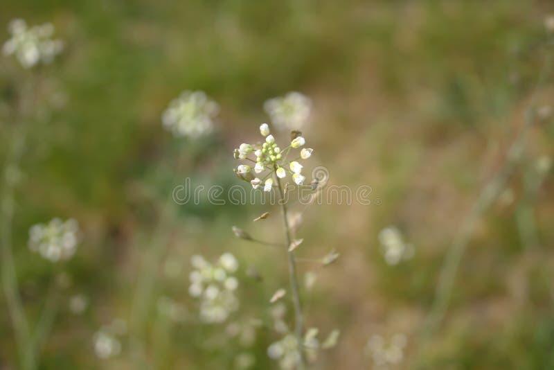 Портмоне дамы цветковых растений на запачканной предпосылке стоковые фотографии rf