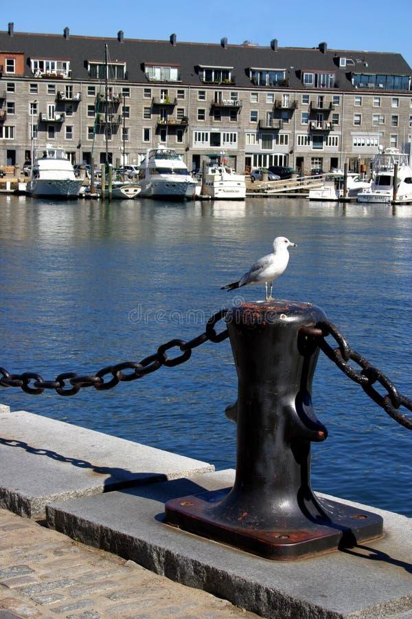 портовый район конца boston северный стоковые изображения