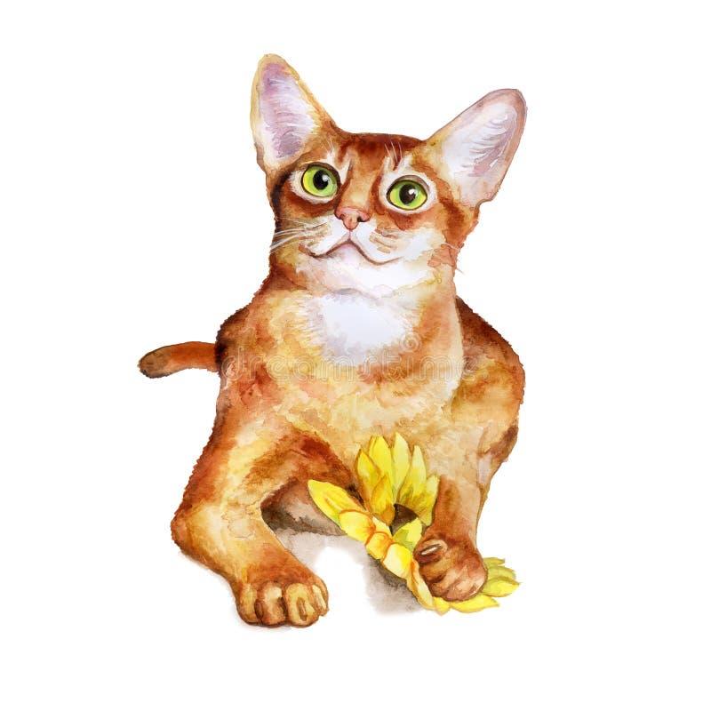 Портрет акварели абиссинского милого кота на белой предпосылке Любимчик нарисованный рукой сладостный домашний иллюстрация вектора