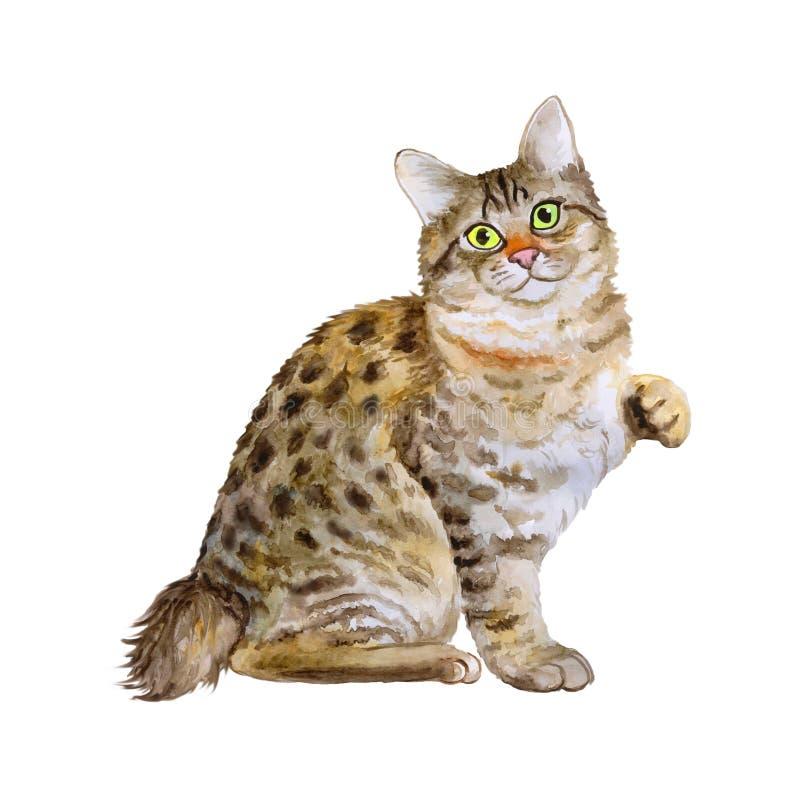 Портрет акварели американского Bobtail короткого кота кабеля на белой предпосылке Любимчик нарисованный рукой сладостный домашний иллюстрация штока