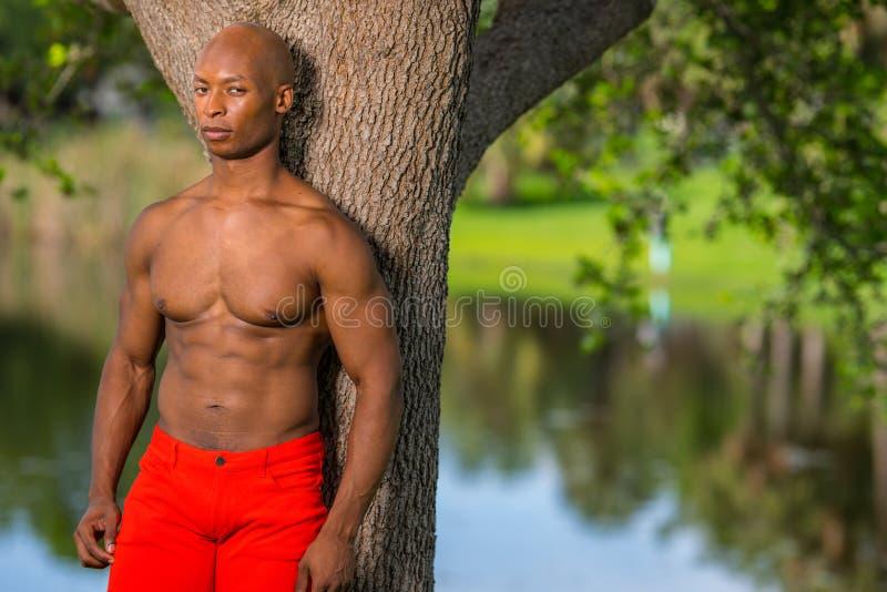 Портрет без рубашки модели фитнеса представляя деревом в парке стоковое изображение