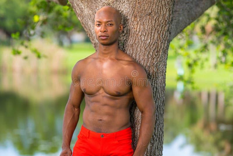 Портрет без рубашки модели фитнеса представляя деревом в парке r стоковое изображение rf