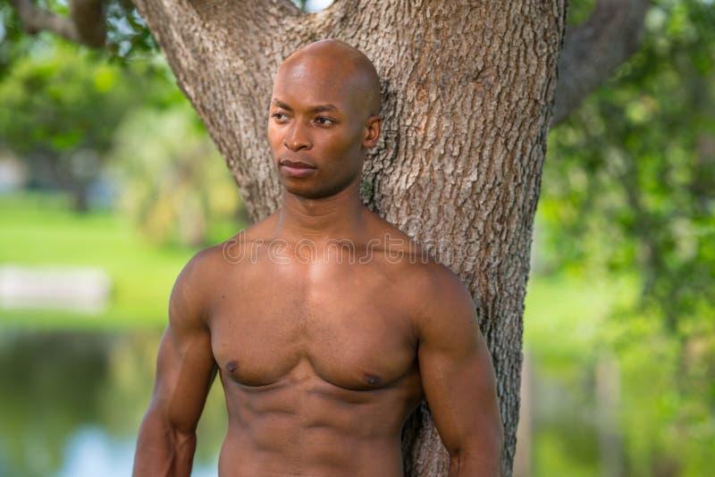 Портрет без рубашки представлять модели фитнеса стоковая фотография rf