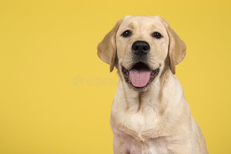 Портрет белокурого щенка retriever labrador на желтой предпосылке стоковые изображения