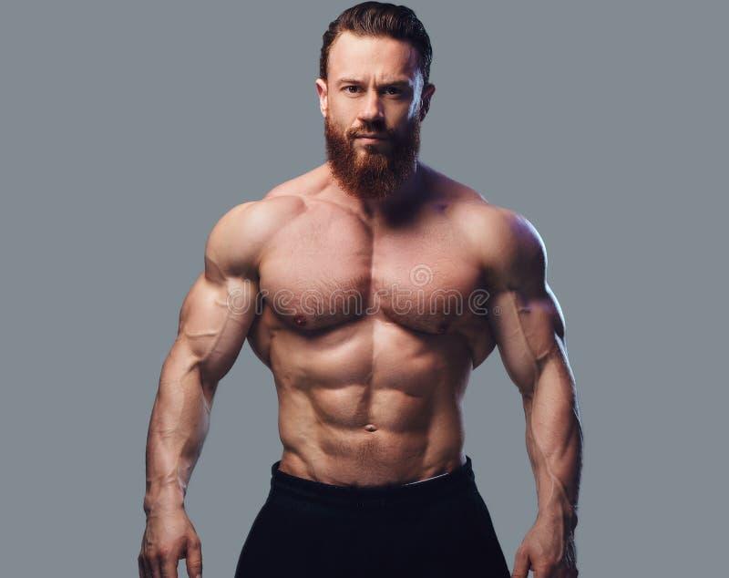 Портрет бородатого без рубашки культуриста стоковая фотография rf