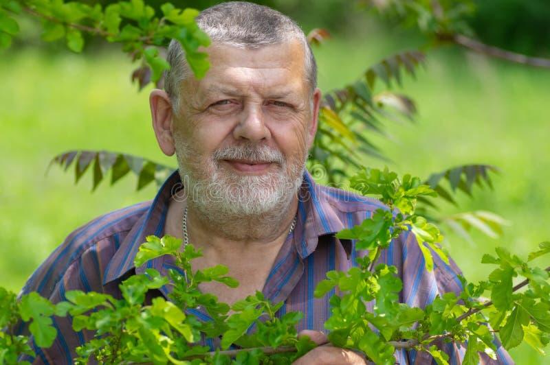 Портрет бородатого кавказского положения старшего человека под тенью дерева шелковицы стоковое изображение rf